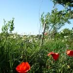 Blauer Himmel, grüner Strand, rot ist der Mohn im Saxenhofland ;)